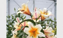 Plantas De Interior Con Flor - Plantas-interior-con-flor
