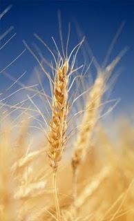 Cmg alimentaci n sana para cel acos - Alimentos que contienen colageno hidrolizado ...
