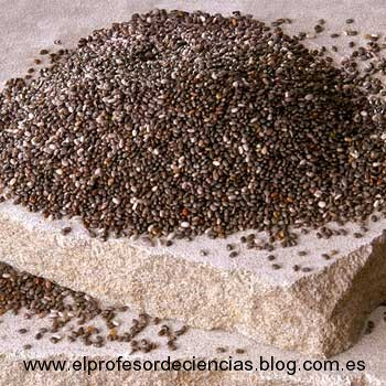 5145989CHIA-SEEDS-GROUP