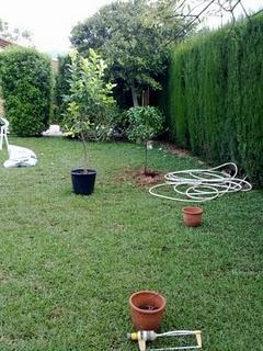 Crear un peque o huerto en el jard n for Hacer un huerto en el jardin