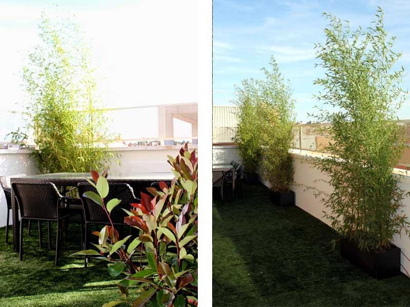 Antes y despu s jardin en tico - Jardines en aticos ...