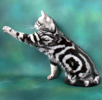 Long Haired Striped Cat Breeds