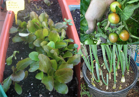 Como cultivar hortalizas en macetas jardineras y for Cultivar vegetales en casa