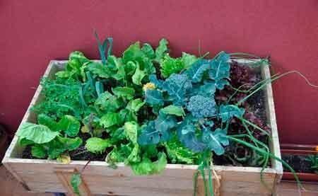 Como cultivar hortalizas en macetas jardineras y for Como cultivar hortalizas
