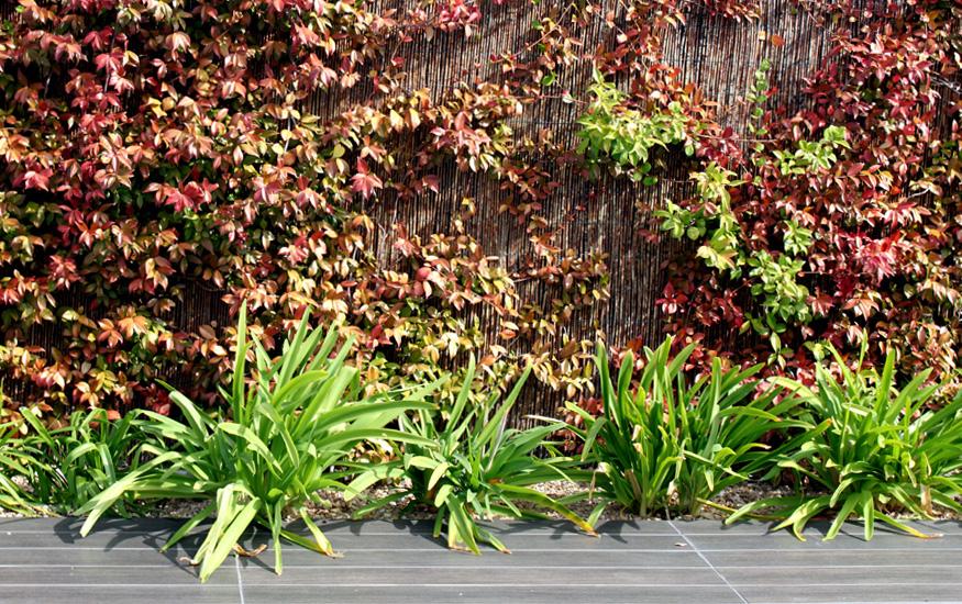 Plantas de dise o en el jardin for Jardin de plantas
