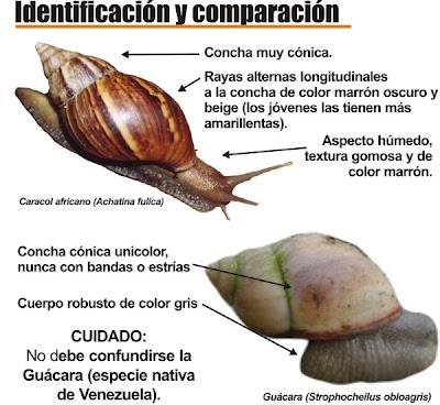 Comunidad de cantarrana dice que los caracoles no son for Caracoles de jardin que comen
