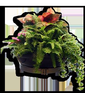 Feng shui plantas lo que necesitas saber para crear buen for Plantas para interiores feng shui