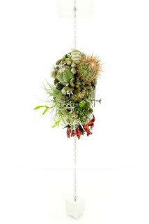 Colgante de cactus y plantas crasas - Plantas crasas colgantes ...