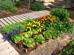 nuestros propios alimentos por una parte si disponemos de una pequea terraza o espacio para crear nuestro mini huerto podremos hacerlo en casa