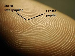 external image huellas-dactilares-identificativas_2_1626370.jpg