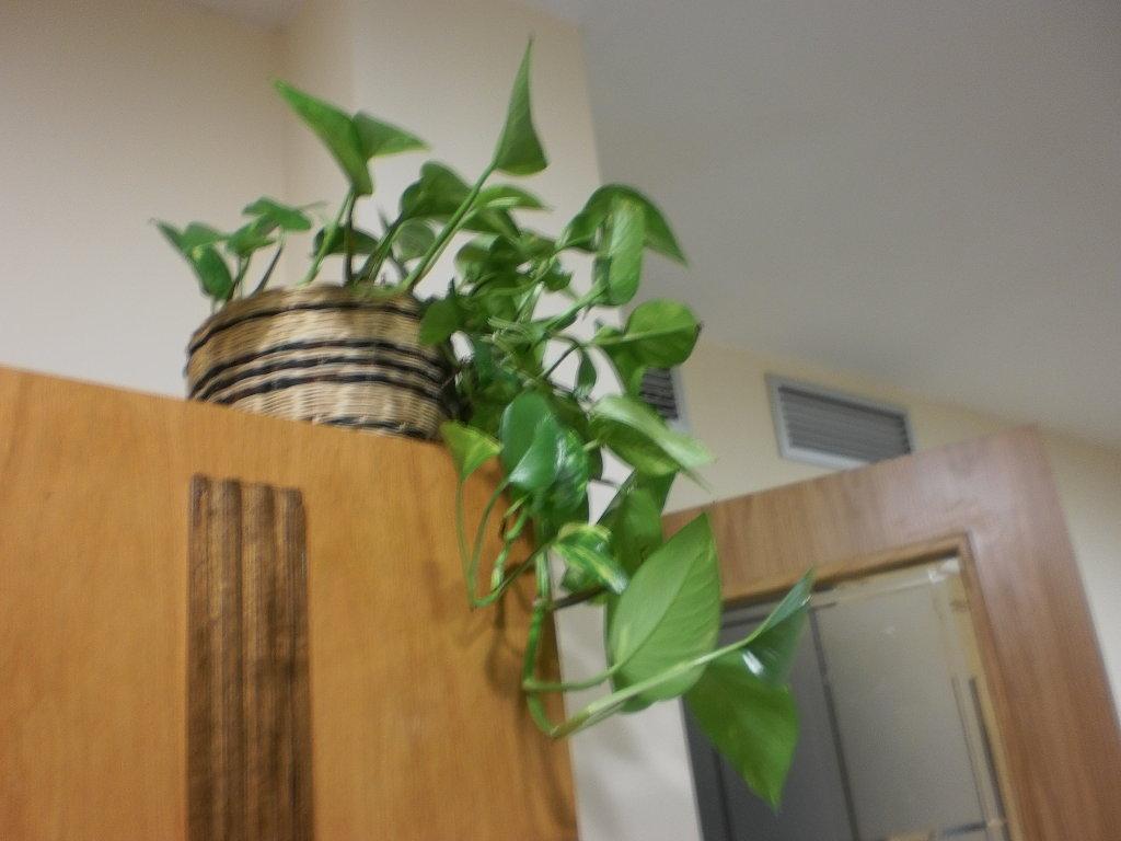Un buen feng shui en tu cocina no es tan dificil de conseguir for Plantas para la cocina segun feng shui