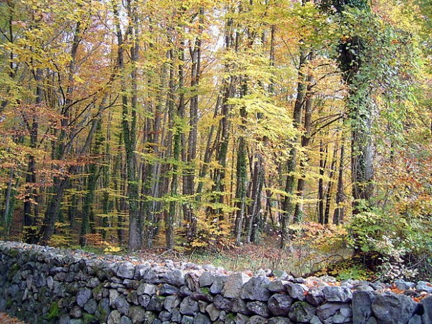 d6b7f9fc26236 España pierde una cuarta parte de sus mejores bosques maduros