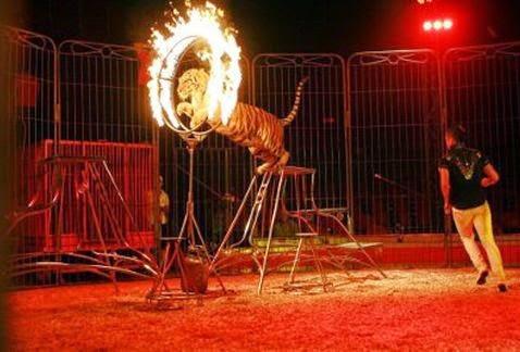 M xico animales fuera de los circos for Portales de chimentos del espectaculo