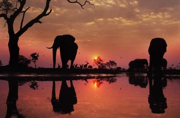 Fotografías Espectaculares De Animales Entre Bellos Amaneceres Y