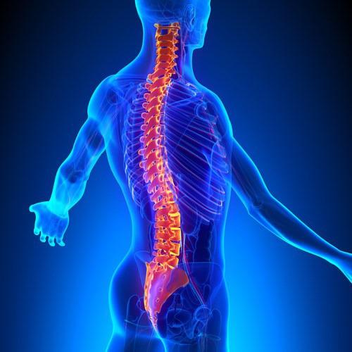 Te explicamos cual es la relación entre la columna vertebral y los ...