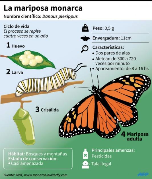 migracion de las mariposas monarcas yahoo dating