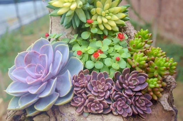 Decoración de jardines pequeños. Ideas, elementos y diseños.
