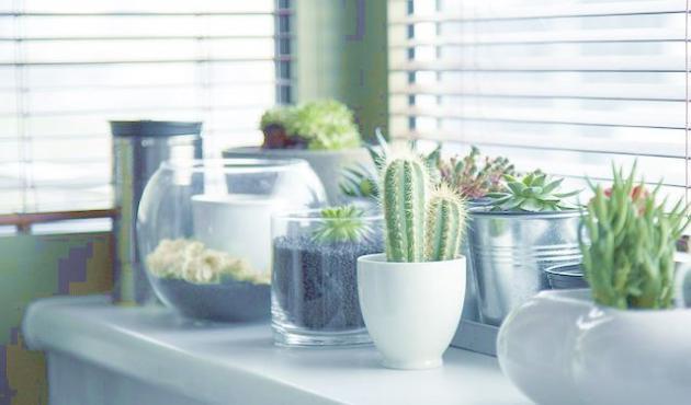 Decoraci n de jardines peque os ideas elementos y dise os for Jardines pequenos originales