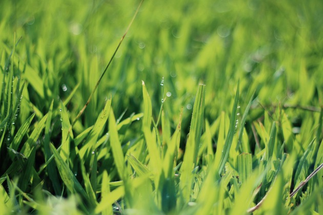 C mo cuidar el c sped durante los meses de verano for Como cuidar el pasto