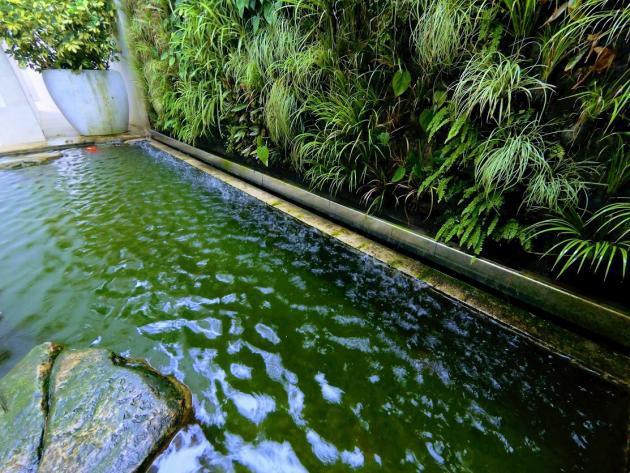 filtrante del filtro biolgico puede suponer una fuente de fosfatos recomendamos analizar las gravas antes de utilizarlas en la piscina biolgica - Piscinas Ecologicas