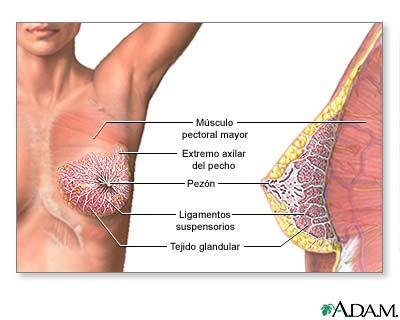 Por qué un hombre desarrolla mamas - esvida