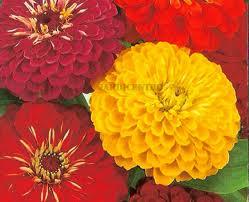 Plantas ornamentales del exterior - Plantas ornamentales de exterior ...