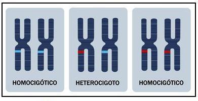 Resultado de imagen de homocigotos